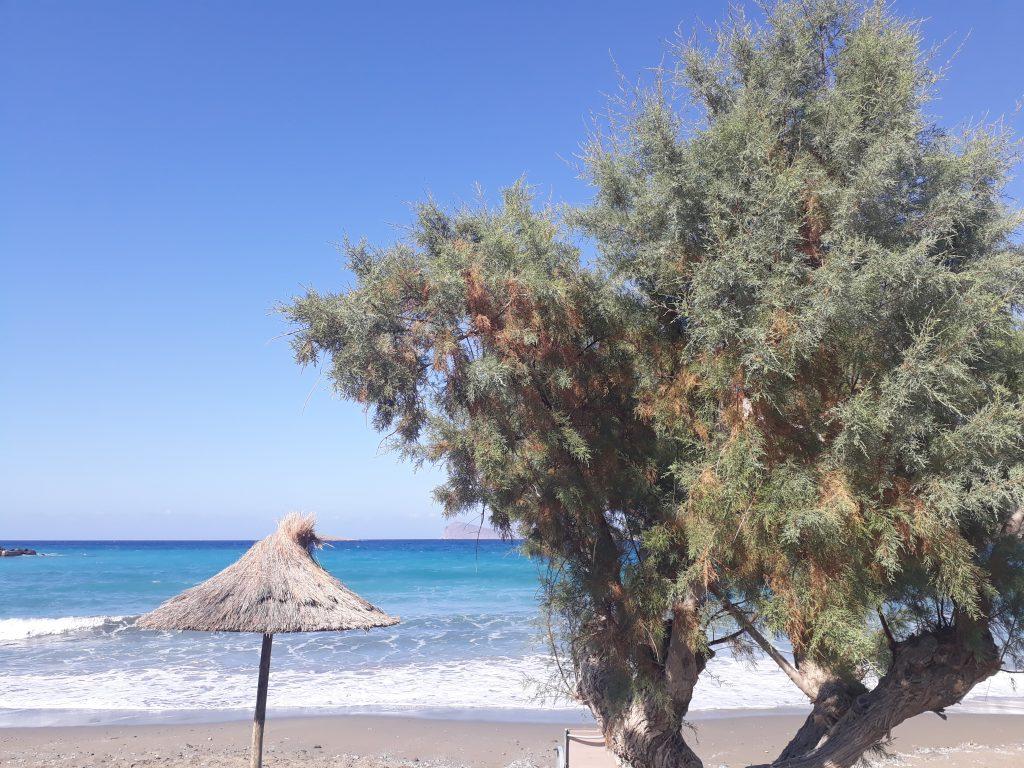 Reisebericht Pachia Ammos Kreta