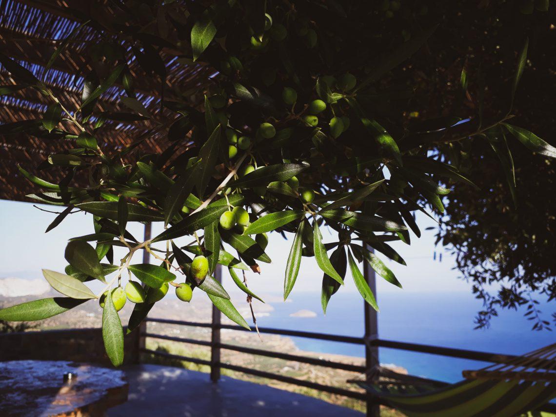 Unterkunft-Olivenhain-Kreta