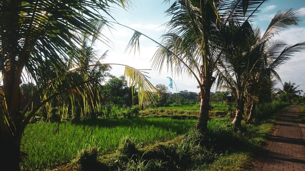 Gitalian-World-Bali